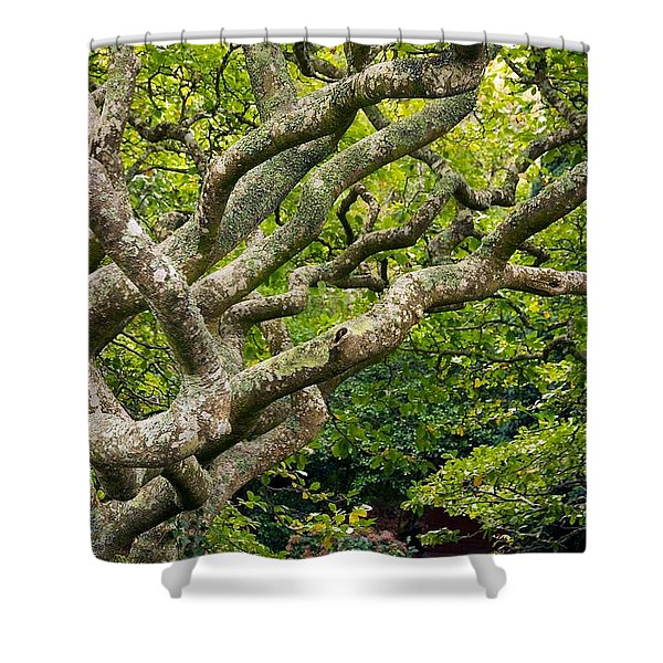Tree #1 Shower Curtain by Stuart Litoff