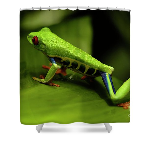Tree Frog 12 Shower Curtain by Bob Christopher