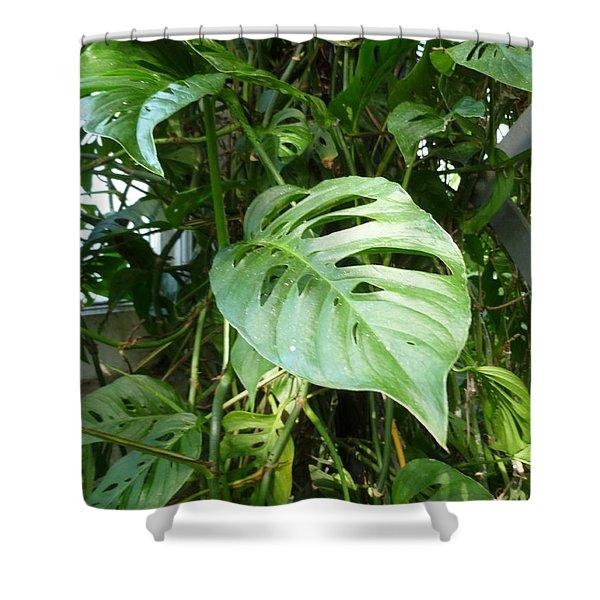 Tropical Green Foliage Shower Curtain by Lingfai Leung