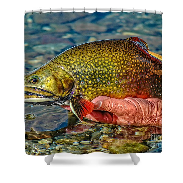 Trout Shower Curtain by Edward Fielding
