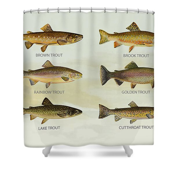 Trout Species Shower Curtain by Aged Pixel