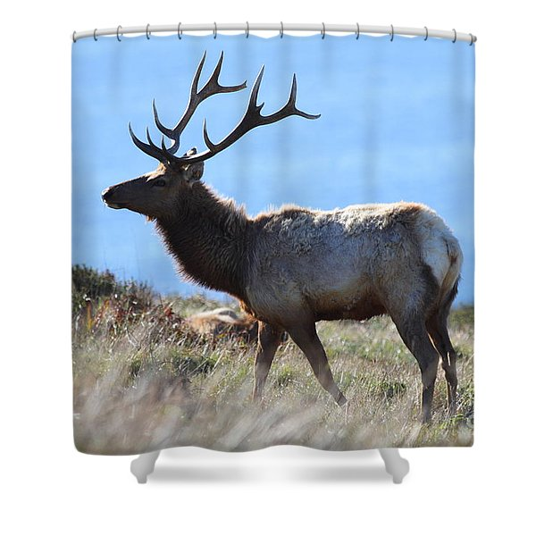 Tules Elks of Tomales Bay California - 7D21218 Shower Curtain by Wingsdomain Art and Photography