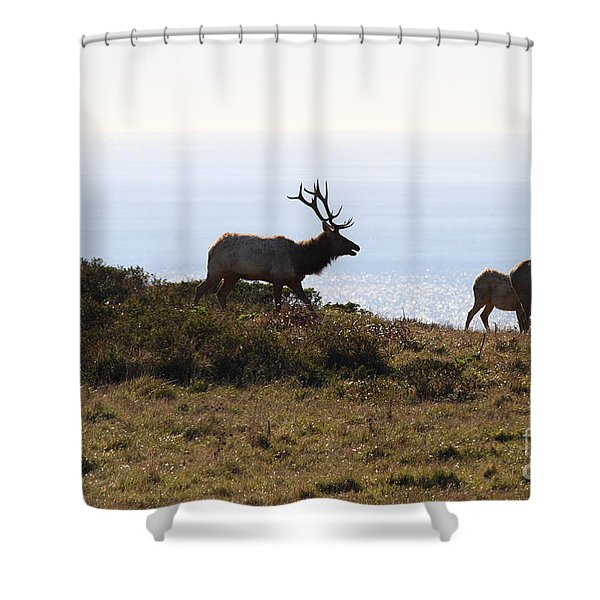 Tules Elks of Tomales Bay California - 7D21230 Shower Curtain by Wingsdomain Art and Photography