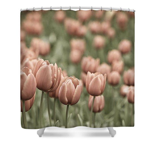 Tulip Field Shower Curtain by Frank Tschakert