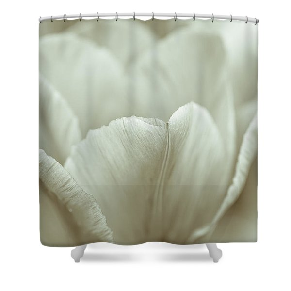 Tulip Shower Curtain by Frank Tschakert