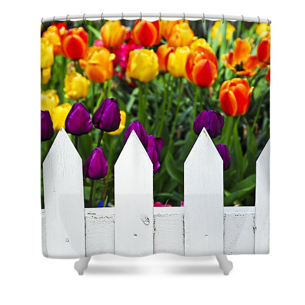 Tulips behind white fence Shower Curtain by Elena Elisseeva
