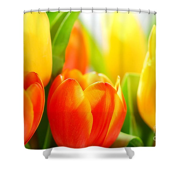Tulips Shower Curtain by Elena Elisseeva