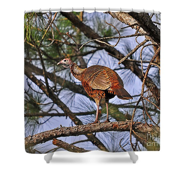 Turkey in a Tree Shower Curtain by Al Powell Photography USA