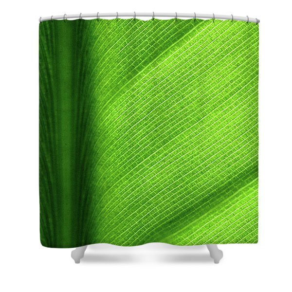 Turning a New Leaf Shower Curtain by Rona Black