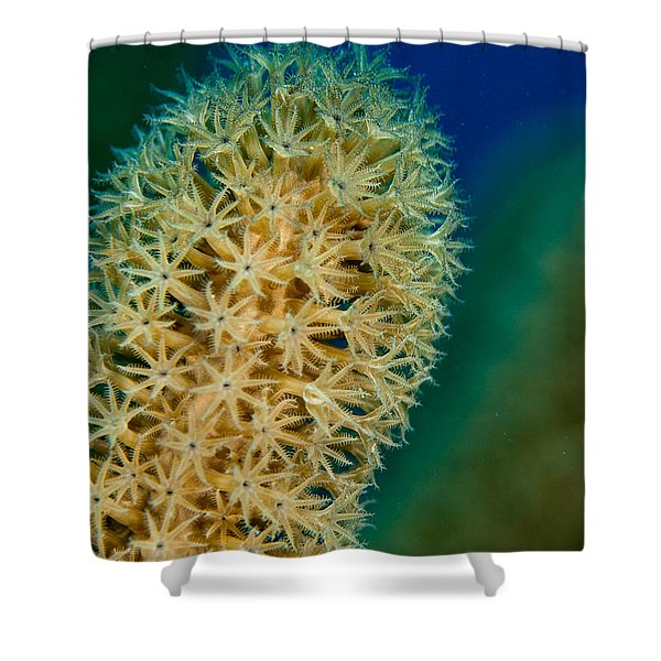 Underwater Gorgonian Shower Curtain by Jean Noren