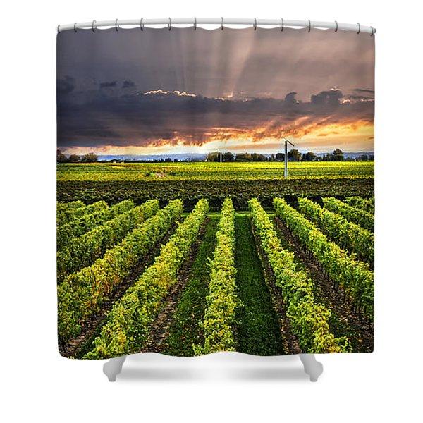 Vineyard at sunset Shower Curtain by Elena Elisseeva