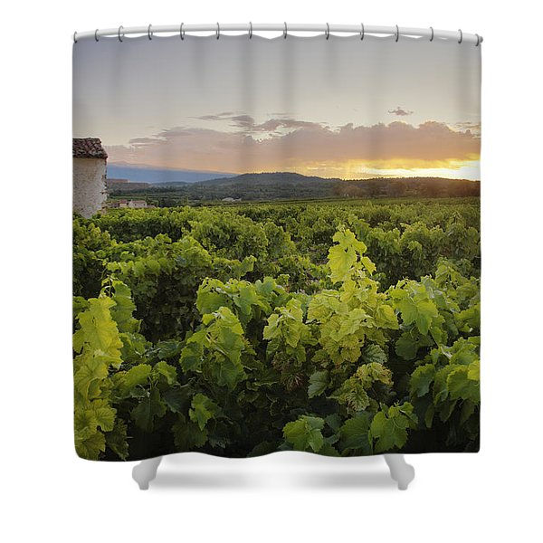Vineyard Near Malemort-du-comtat Shower Curtain by Andy Kerry