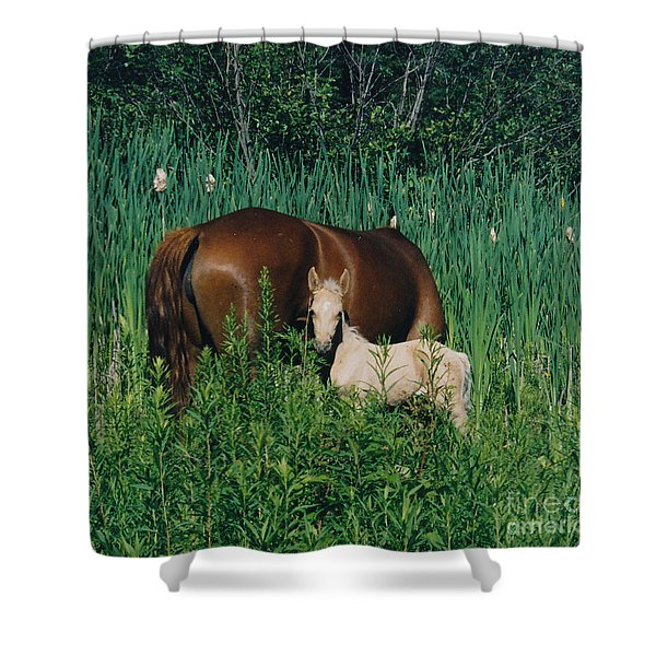 Viva Zapata Contratercero And Her Dam Calista Shower Curtain by Patricia Keller