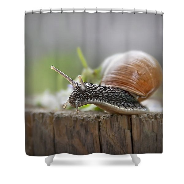 Voyage Of Discovery Shower Curtain by Evelina Kremsdorf