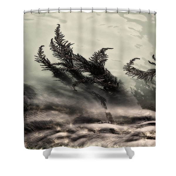 Water Fronds Shower Curtain by Dave Bowman