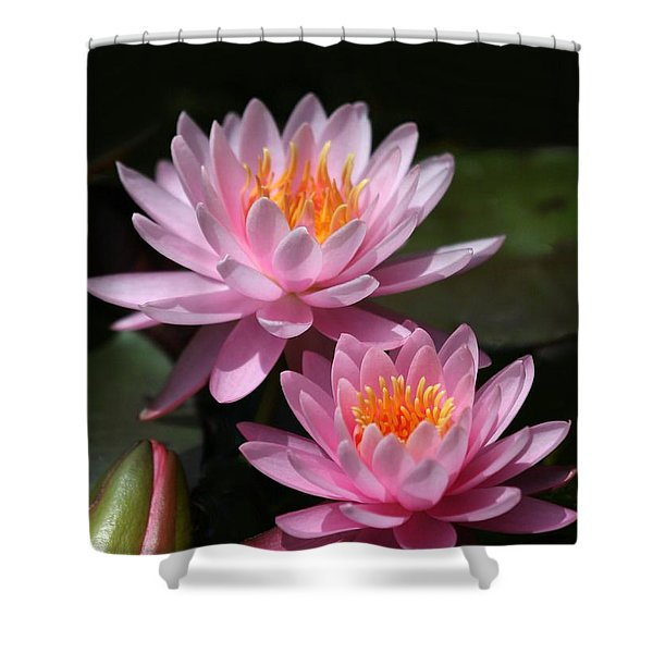 Water Lilies Love the Sun Shower Curtain by Sabrina L Ryan