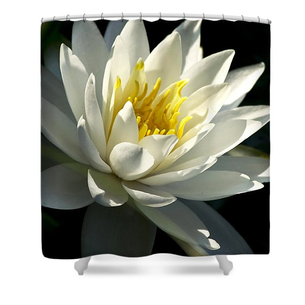 Water Lily Shower Curtain by Christina Rollo