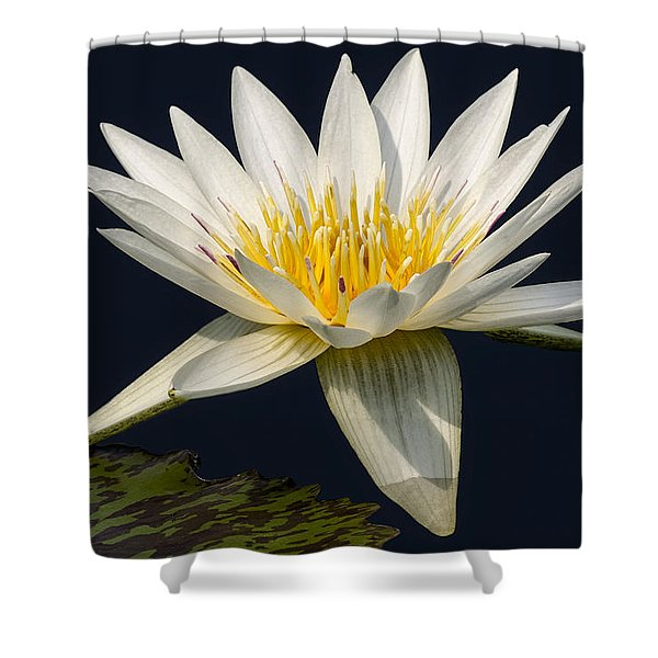 Waterlily and Pad Shower Curtain by Susan Candelario