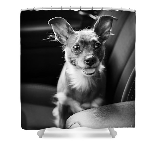 We Goin For A Ride Shower Curtain by Edward Fielding