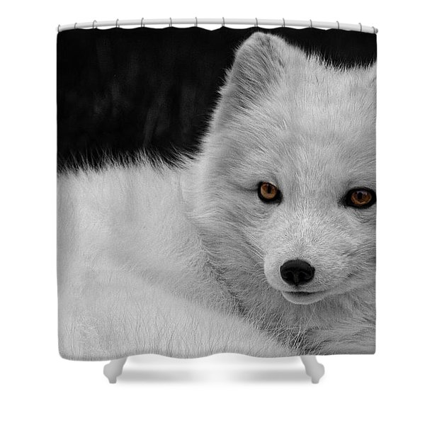 Wee Arctic Hunter D3613 Shower Curtain by Wes and Dotty Weber