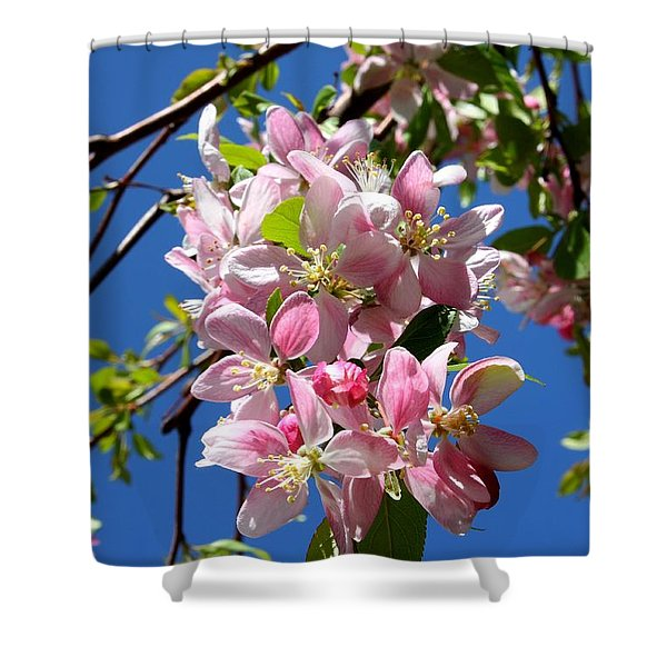 Weeping Cherry Tree Blossoms Shower Curtain by Carol Groenen