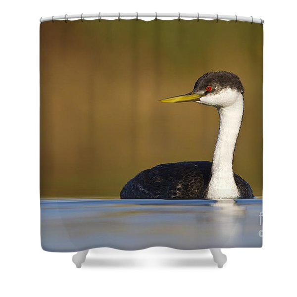 Western Grebe On The Lake Shower Curtain by Bryan Keil