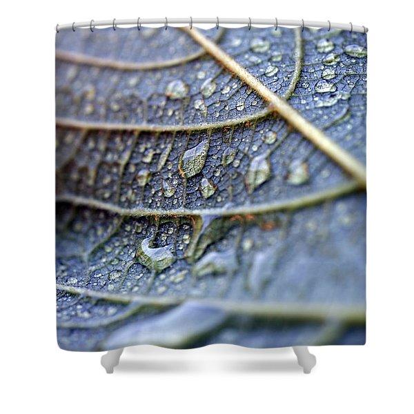 Wet Leaf Shower Curtain by Frank Tschakert