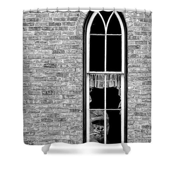 What 800 Lbs Gorilla Bw Shower Curtain by Steve Harrington