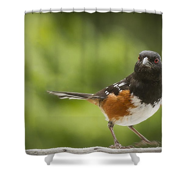 Where Am I Shower Curtain by Jean Noren