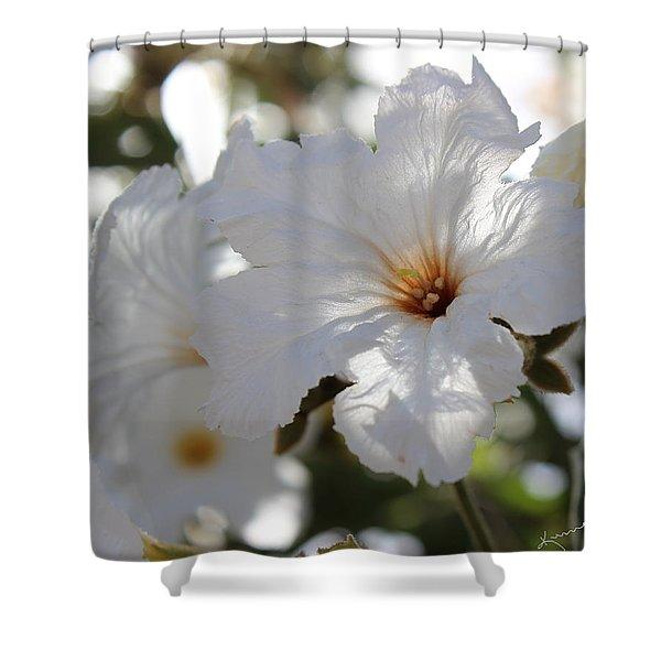 White Cordia Shower Curtain by Kume Bryant