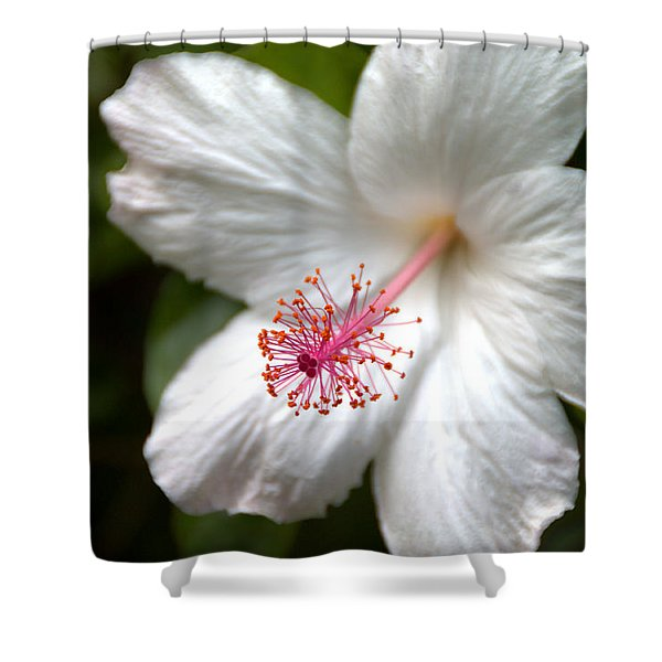 White Hibiscus Shower Curtain by Brian Harig