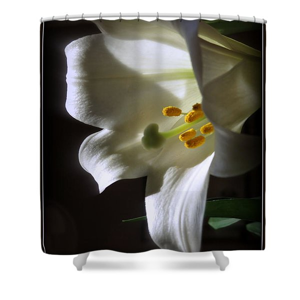White Lily Shower Curtain by Kay Novy