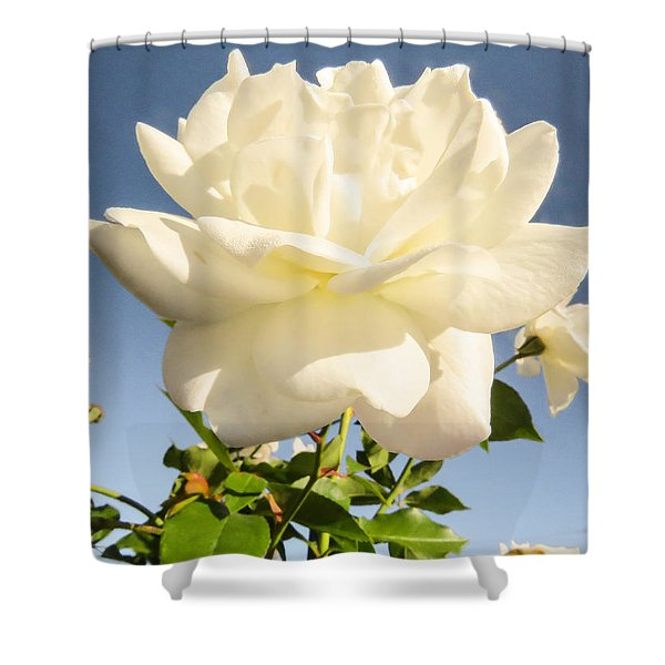 White On Blue Shower Curtain by Zina Stromberg