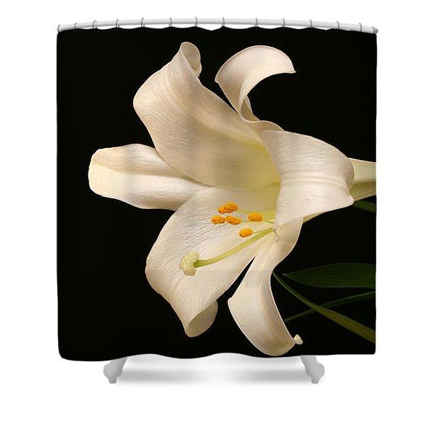 White Trumpet Shower Curtain by Doug Norkum