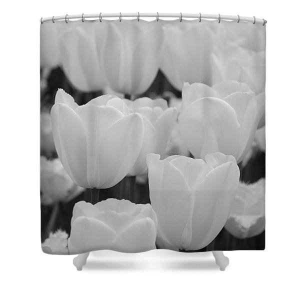 White Tulips B/w Shower Curtain by Jennifer Lyon