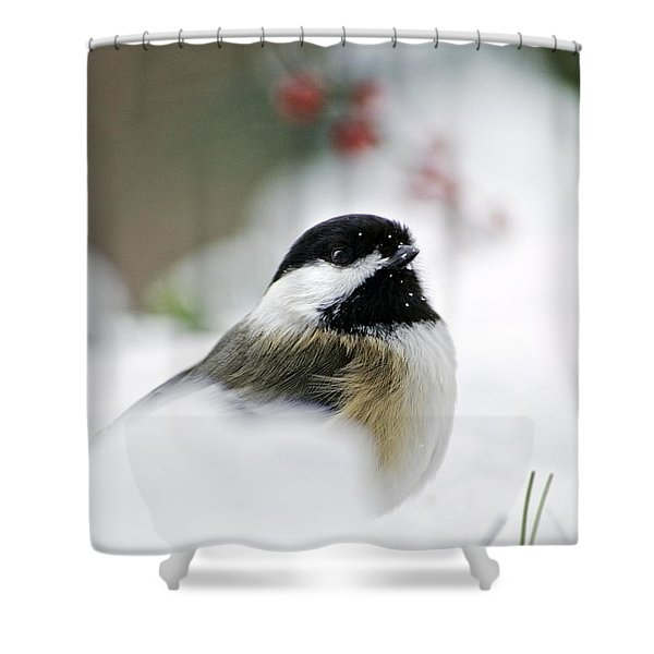 White Winter Chickadee Shower Curtain by Christina Rollo