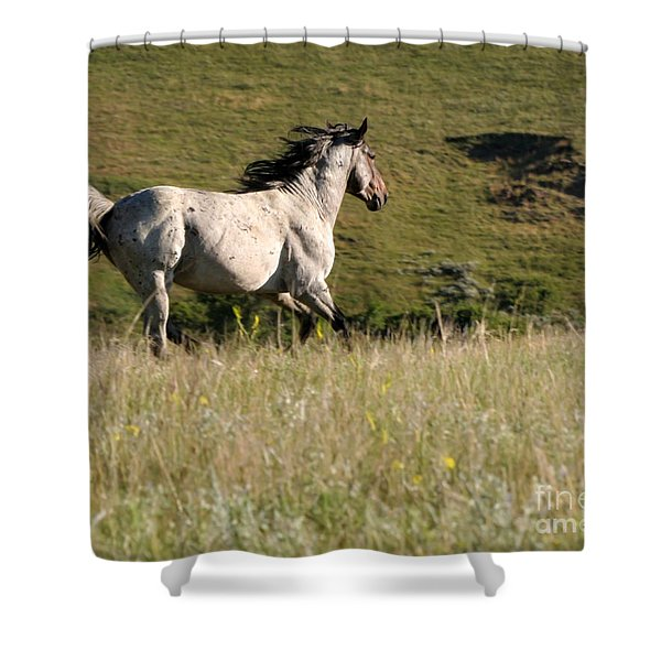 Wild Appaloosa Running away Shower Curtain by Sabrina L Ryan