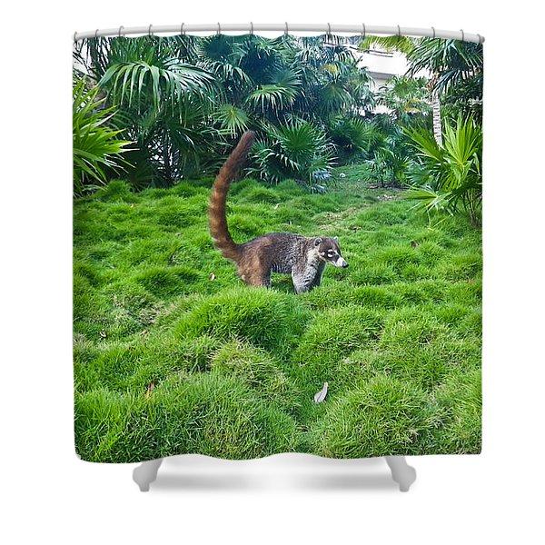 Wild Coati Shower Curtain by Eti Reid
