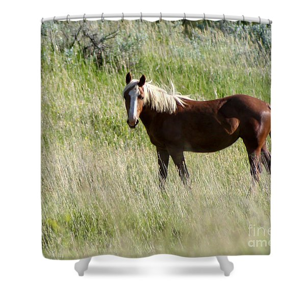 Wild Palomino Shower Curtain by Sabrina L Ryan