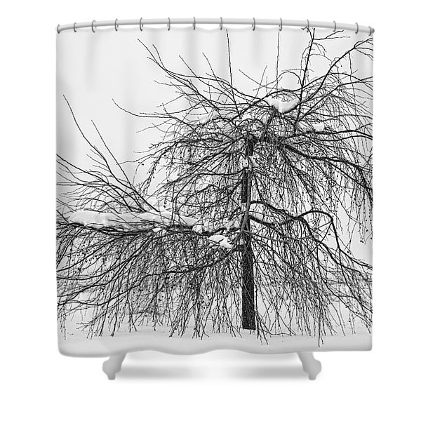 Wild Springtime Winter Tree Black and White Shower Curtain by James BO  Insogna