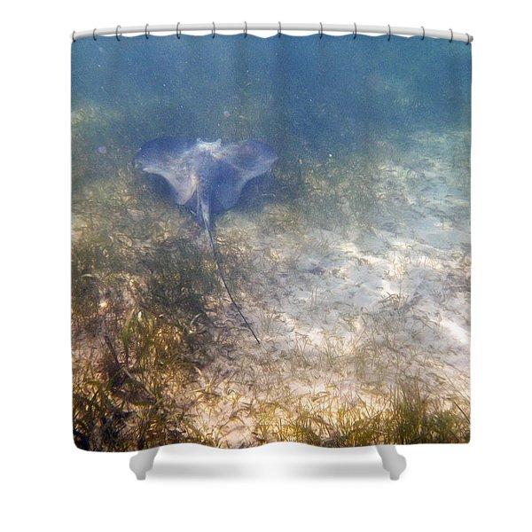 Wild Sting Ray Shower Curtain by Eti Reid