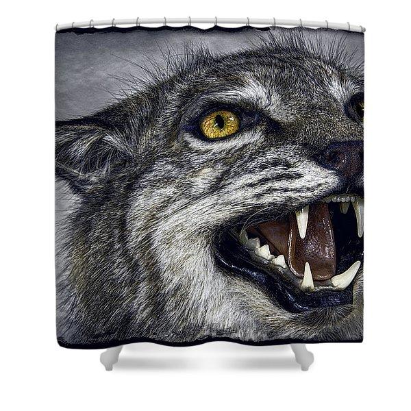 Wildcat Ferocity Shower Curtain by Daniel Hagerman