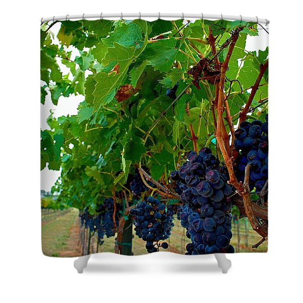 Wine Grapes on the Vine Shower Curtain by Kristina Deane