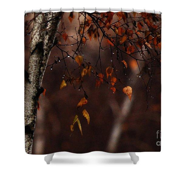 Winter Birch Shower Curtain by Linda Knorr Shafer