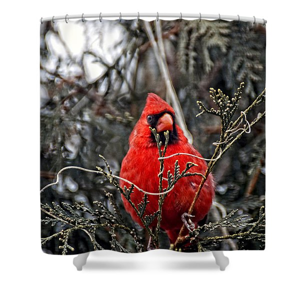 Winter Cardinal 03 Shower Curtain by Thomas Woolworth