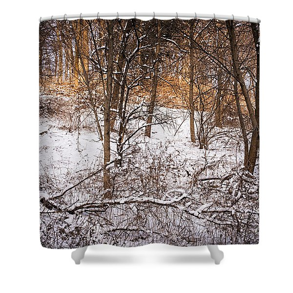 Winter forest Shower Curtain by Elena Elisseeva