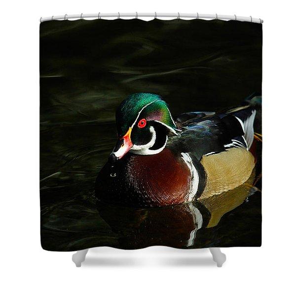 Wood Duck Drip Shower Curtain by Steve McKinzie