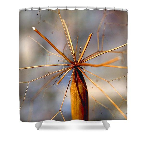 Wth? Shower Curtain by Joe Schofield