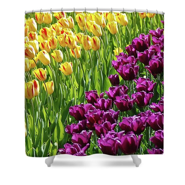 Yellow and Purple Tulips Shower Curtain by Allen Beatty