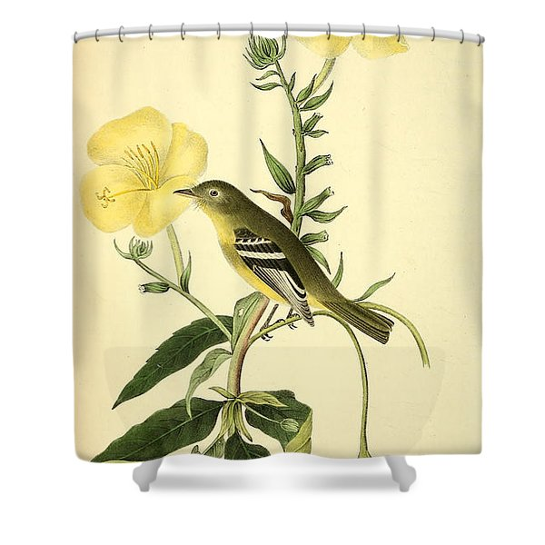 Yellow-bellied Flycatcher Shower Curtain by Philip Ralley